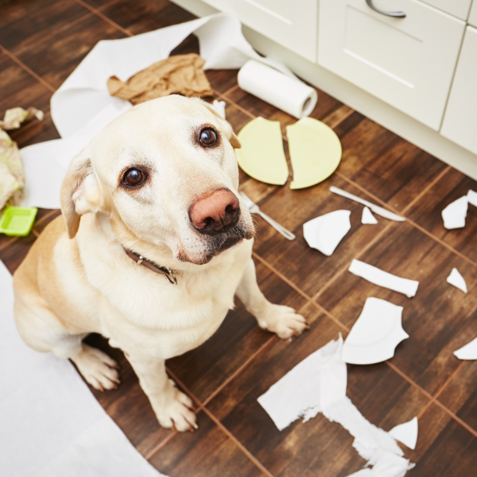 How to tell if your dog did something bad